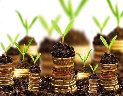 Golden coins in soil with young plant isolated. Money growth concept.; Shutterstock ID 130319279; PO: aol; Job: production; Client: drone
